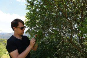 Wayapi acheter le meilleur acérola poudre pure