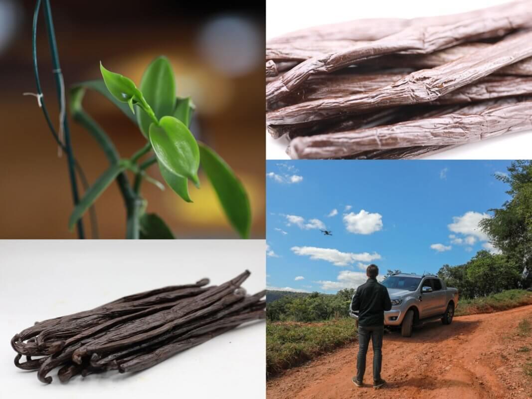 vanille de Papouasie plantation et du monde vanille du Brésil, plantation de Julio, David expert en vanille