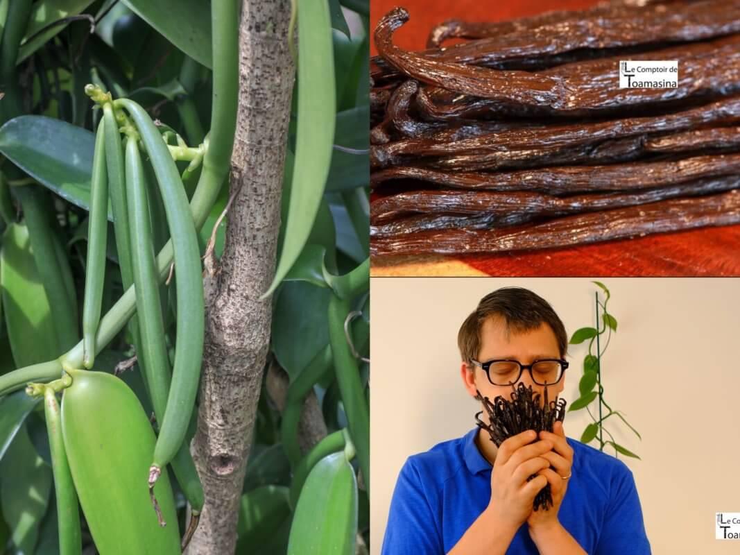 Gousses de vanille - Madagascar, Papouasie, Ouganda, Brésil, Tahiti, Mexique, Guadeloupe au meilleur prix